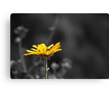 Yellow Sunflower Canvas Print