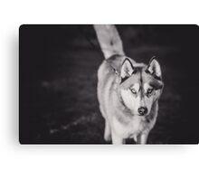 Friendly Husky Canvas Print