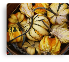 Gourds In A basket Canvas Print