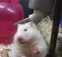 Hamster by Suzanne Tineo