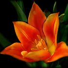 Orange Flower (full view) by debsdesigns