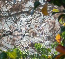 SPIDER WEB IN GREEN  Sticker