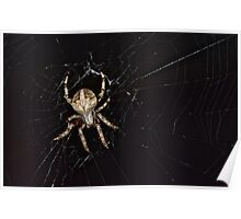 Spider Web Poster