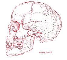 Red Skull Photographic Print