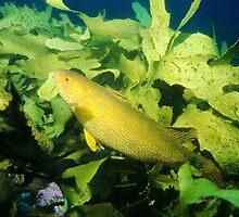 Herring Cale, Long Reef by Erik Schlogl