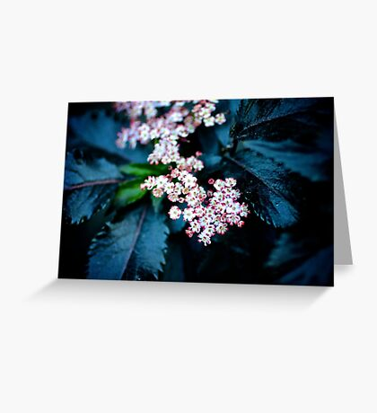 Tiny blossoms Greeting Card