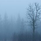 Emerging Tree by April Koehler