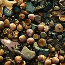 Nuts and Stones by christiane