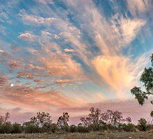 Gum Tree Moment, Angledool NSW by Viki Murray