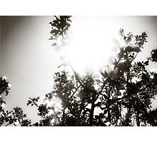 Apple Tree Sunburst Photographic Print