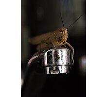 Good Morning Mr Cricket Photographic Print