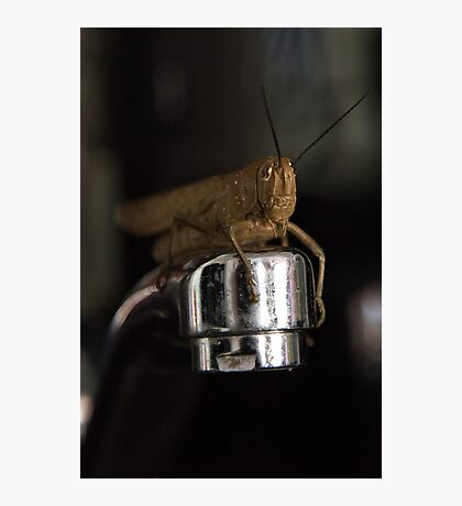 Good Morning Mr Cricket Photographic Print
