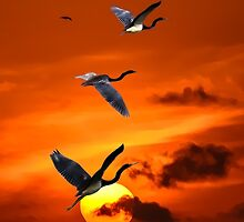 Sunset and herons in fly by LudaNayvelt