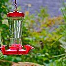 Humming birds by Carolyn Clark
