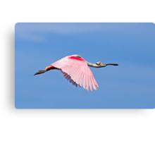 Roseate Spoonbill in Flight Canvas Print
