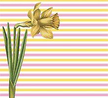 Yellow Daffodil Pink and Yellow Stripes by tnmgraphics