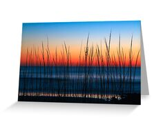 Dune Grass Dawn Greeting Card