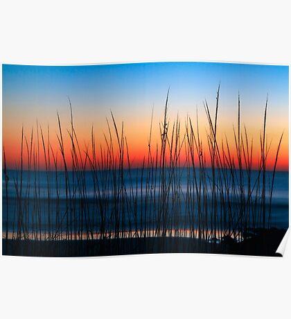 Dune Grass Dawn Poster