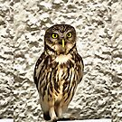 Small Owl In Camouflage by taiche