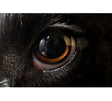 Macro Dog Eye Photographic Print