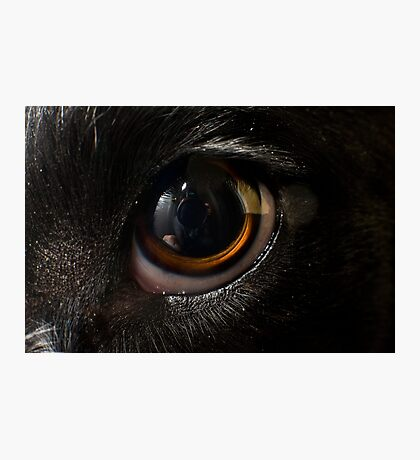 Macro Dog Eye Photographic Print