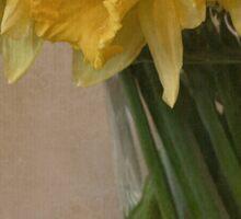 Daffodils Sticker