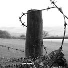 barb barb,,,barbed wire  by paula cattermole artinapuddle