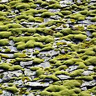 Moss on the rocks by Arie Koene