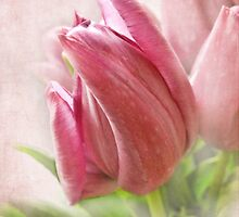 Tulip by vigor