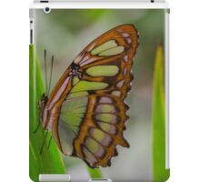 Green Butterfly -Amazon Basin - about hand-sized iPad Case/Skin