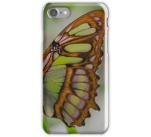 Green Butterfly -Amazon Basin - about hand-sized iPhone Case/Skin