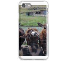 Donkeys in Queenstown iPhone Case/Skin