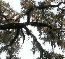 Spanish Moss by Goatandco