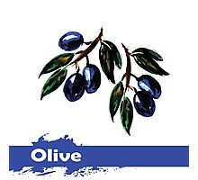 fruit olives, hand drawn watercolor Photographic Print