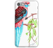 Blue Tail Parrot - Green Day iPhone Case/Skin
