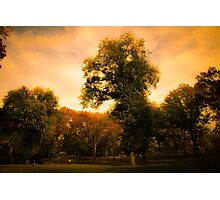 Golden Hour In Central Park Photographic Print