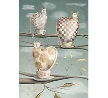 Cats in Cups Photographic Print