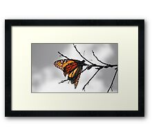 MONARCH BUTTERFLY IN A GRAY WORLD Framed Print