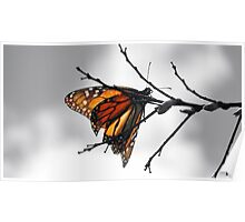 MONARCH BUTTERFLY SURROUNDED IN GRAY SCALE Poster