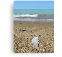 Feather at the beach Canvas Print