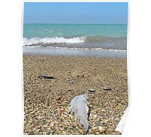 Feather at the beach Poster