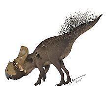 Protoceratops Photographic Print