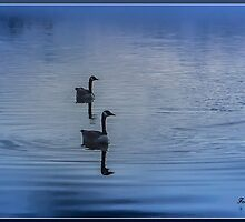 In The Fog by Jamie Cameron