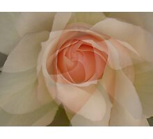 Petals - JUSTART © Photographic Print