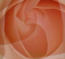 Petals - JUSTART © Sticker