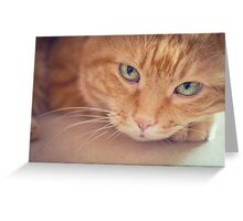 Red cat. Greeting Card