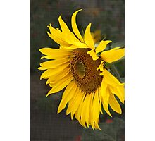 Keep your face to the sunshine...  Photographic Print