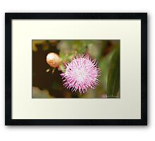 Thistle and Ant Framed Print