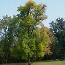 Autumn has arrived by Ana Belaj