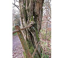Tree Eats Fence! Photographic Print